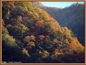 Nov18th_28_HigashiNipparaRoadFallColorsRC