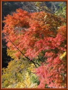 Nov18th_85_HigashiNipparaRoadFallColorsRC