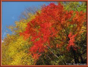 Nov18th_99_HigashiNipparaRoadFallColorsRC