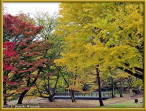 Nov24_03_NogawaMusashinoPark_FallColorsRC