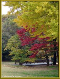 Nov24_08_NogawaMusashinoPark_FallColorsRC