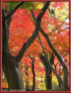 Nov24_101_NogawaMusashinoPark_FallColorsRC