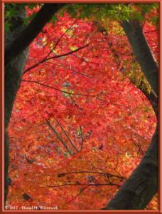Nov24_102_NogawaMusashinoPark_FallColorsRC