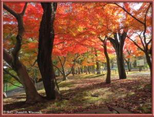 Nov24_108_NogawaMusashinoPark_FallColorsRC
