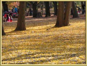 Nov24_110_NogawaMusashinoPark_FallColorsRC