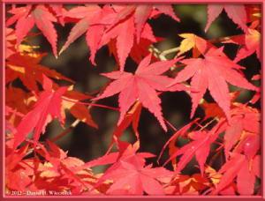 Nov24_113_NogawaMusashinoPark_FallColorsRC