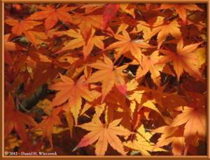 Nov24_115_NogawaMusashinoPark_FallColorsRC