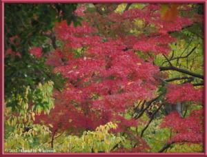 Nov24_18_NogawaMusashinoPark_FallColorsRC