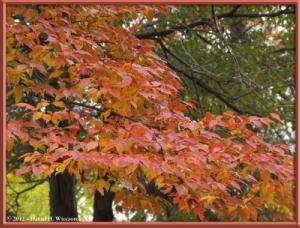 Nov24_20_NogawaMusashinoPark_FallColorsRC