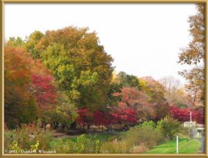 Nov24_25_NogawaMusashinoPark_FallColorsRC