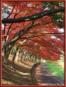 Nov24_36_NogawaMusashinoPark_FallColorsRC