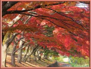 Nov24_38_NogawaMusashinoPark_FallColorsRC