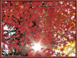 Nov24_44_NogawaMusashinoPark_FallColorsRC