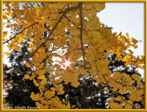 Nov24_46_NogawaMusashinoPark_FallColorsRC