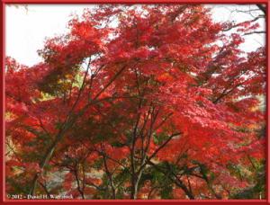 Nov24_47NoWires_NogawaMusashinoPark_FallColorsRC