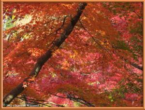 Nov24_54_NogawaMusashinoPark_FallColorsRC