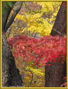 Nov24_58_NogawaMusashinoPark_FallColorsRC