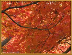 Nov24_60_NogawaMusashinoPark_FallColorsRC
