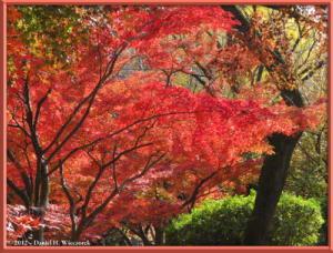 Nov24_64_NogawaMusashinoPark_FallColorsRC