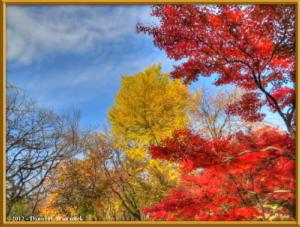 Nov24_68_69_70_TMDE_NogawaMusashinoPark_FallColorsRC