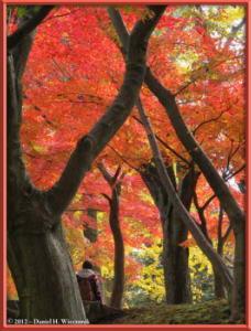Nov24_99_NogawaMusashinoPark_FallColorsRC