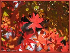 Nov24th_MusashinoPark047_FallColorsRC