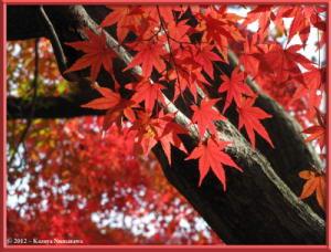 Nov24th_MusashinoPark051_FallColorsRC