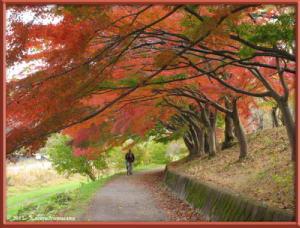 Nov24th_MusashinoPark055_FallColorsRC