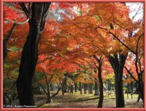 Nov24th_MusashinoPark060_FallColorsRC