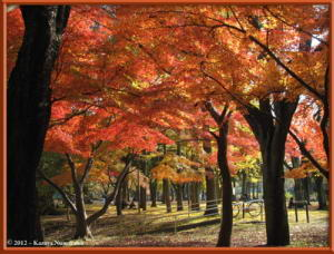 Nov24th_MusashinoPark062_FallColorsRC