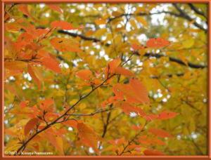 Nov24th_NogawaPark015_FallColorsRC