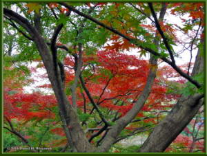 Nov22_09_FallColors_MusashinoParkRC