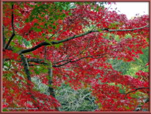 Nov22_12_FallColors_MusashinoParkRC