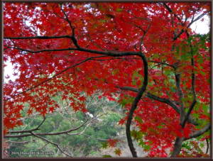 Nov22_13_FallColors_MusashinoParkRC