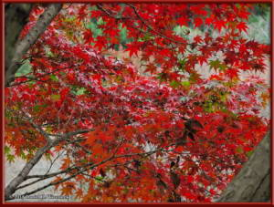Nov22_17_FallColors_MusashinoParkRC