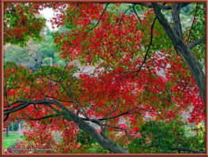 Nov22_22_FallColors_MusashinoParkRC