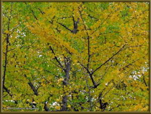 Nov22_23_FallColors_MusashinoParkRC