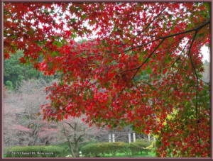 Nov22_27_FallColors_MusashinoParkRC