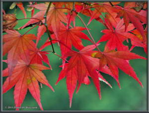 Nov22_34_FallColors_MusashinoParkRC