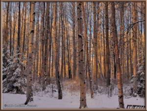 Nov8_2_SunriseColorsRC