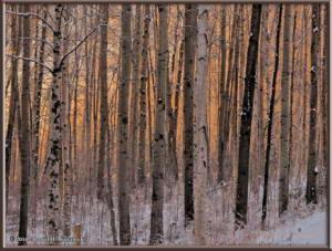 Nov8_7_SunriseColorsRC