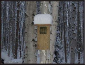 Nov13_03_SnowStormRC