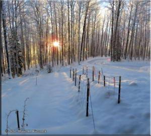 Nov17_15_16_AutoPano_SnowyWalkFromHomeRC