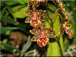 Jan2_JindaiBG_Orchid02RC.jpg