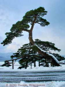 Dec31_TazawakoLakeArea35_35s_Horai_Pine_FusedRC