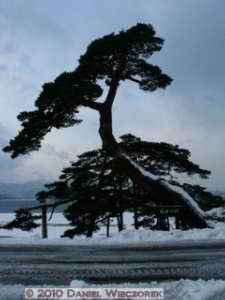 Dec31_TazawakoLakeArea35_Horai_PineRC