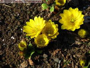 Jan30_JindaiBotGar035_AdonisRC