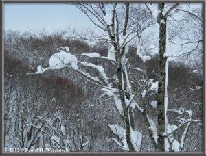 Dec31_WalkingToMagorokuHotSpring_48RC