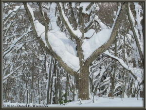 Dec31_WalkingToTsuruNoYu_HotSpring_84RC