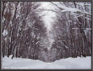 Dec31st093_TsuruNoYuRC